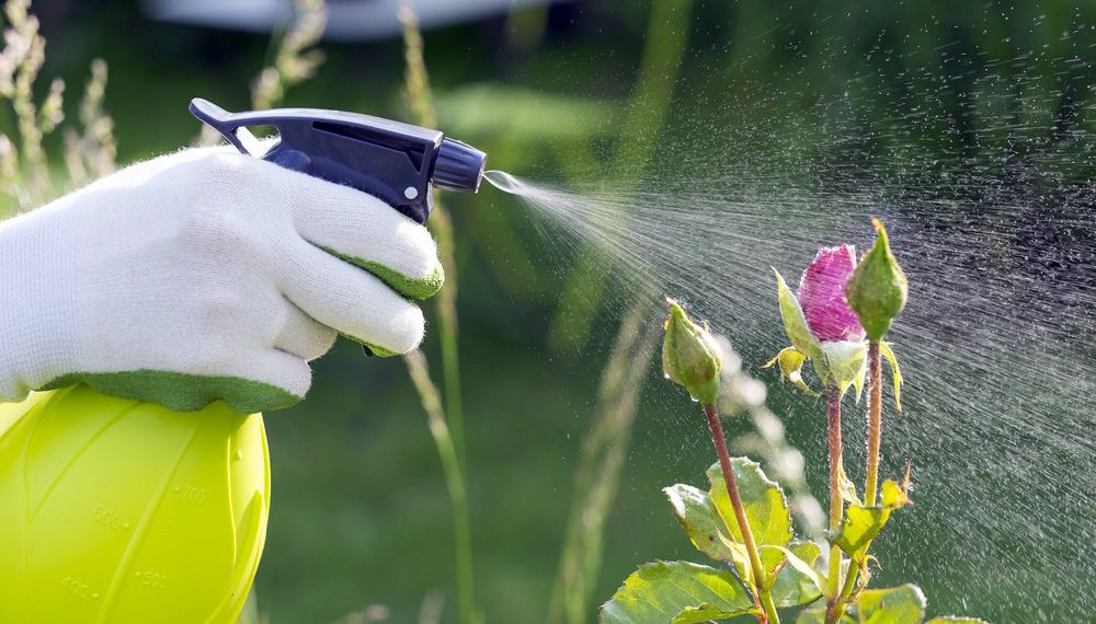 insecticide-naturel-plantes