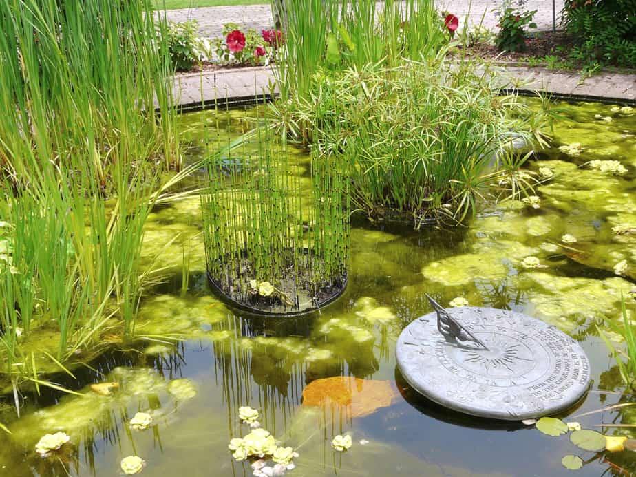 14 plantes aquatiques pour bassin jardin et - Plantes aquatiques pour bassin de jardin ...