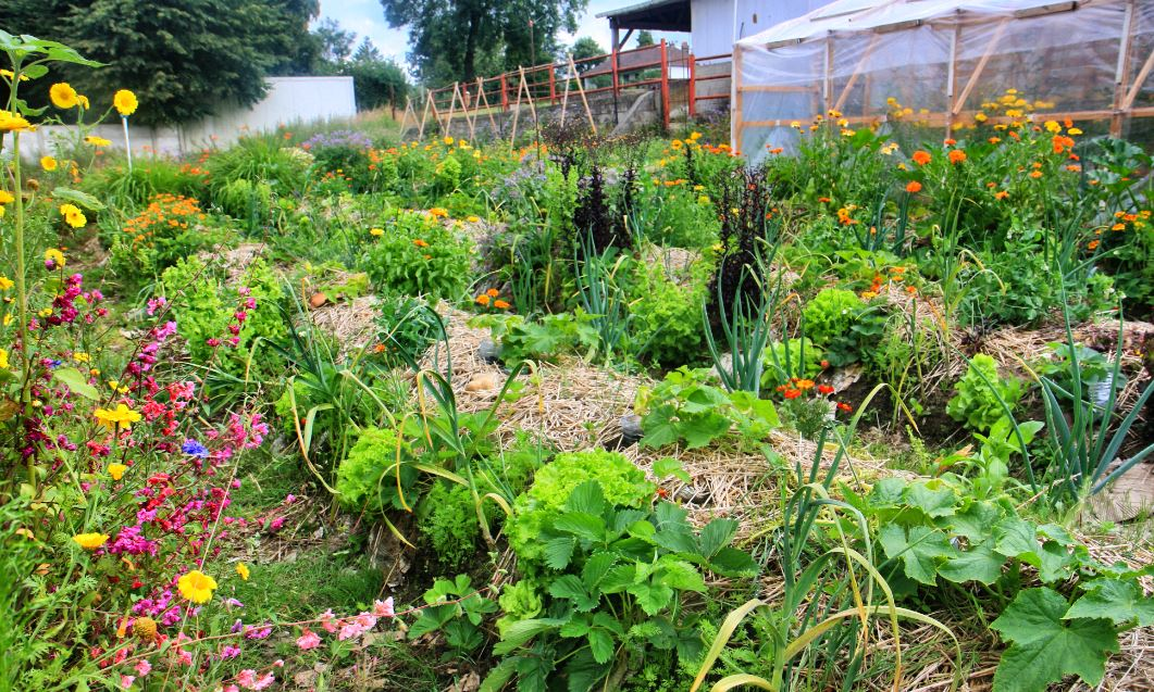 strategie-permaculture